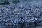 Tanzania15